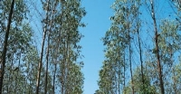 Tree-farming yields bumper harvest