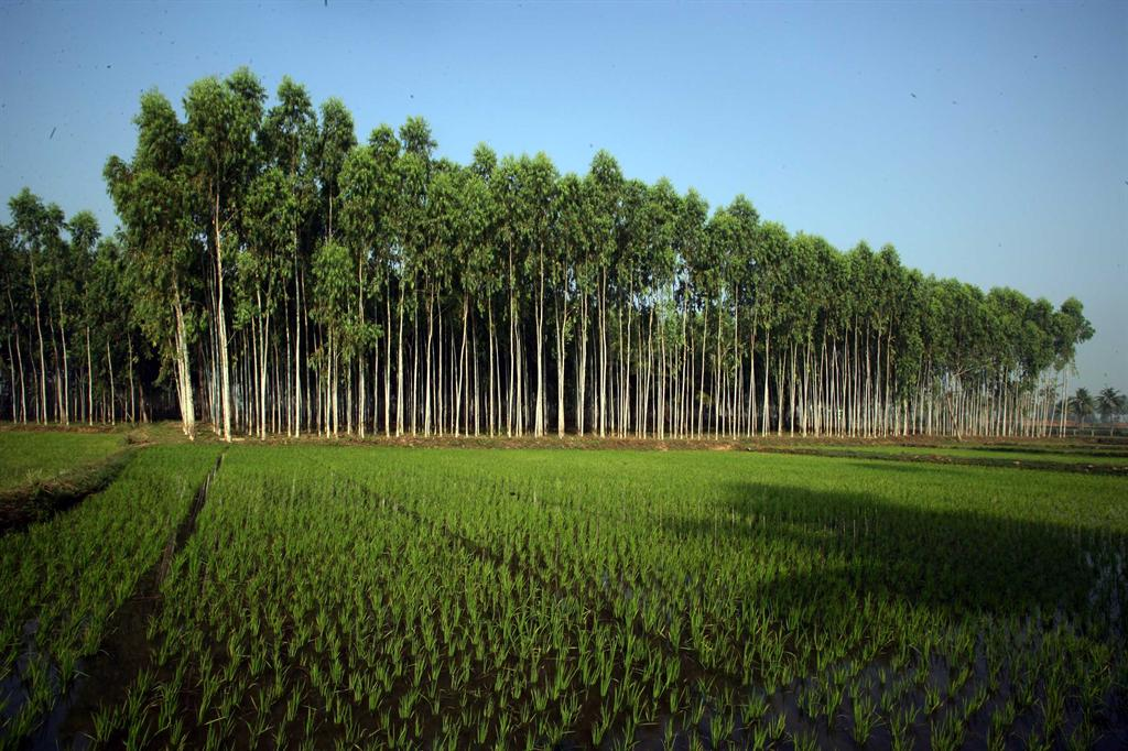 Itc Paperboards And Specialty Papers Division Plantations
